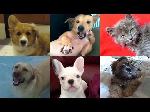 Чихающие животные - Видео приколы про животных