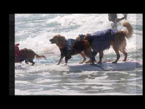 Dog Surfathon 2016