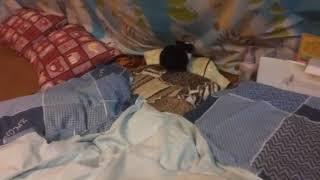 【繁星】布布 在床上兔子舞
