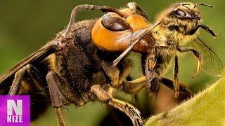 Die Größten Insekten Der Welt