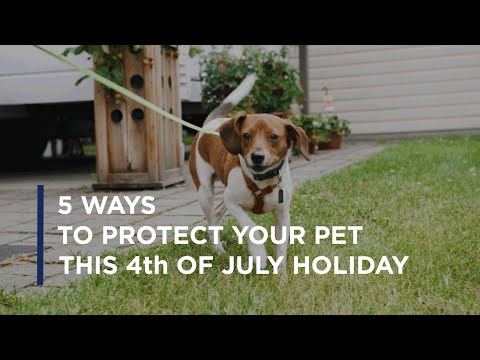 Petco Love and Kat Albrecht-Thiessen Introduce Preventative Tips...