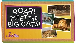 Roar! Meet The Big Cats!