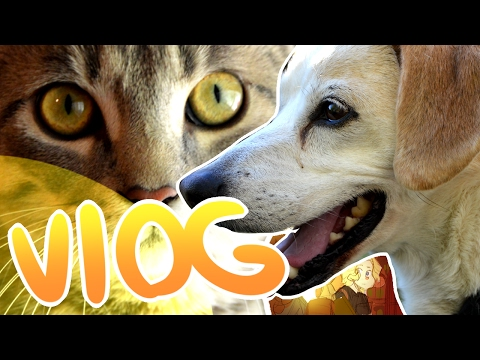 Vlogo of my Doggo - A day in the life of a webcomic artist