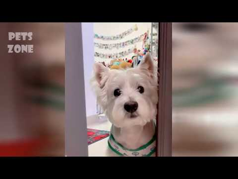 Funny Animals: Cute Cats and Dogs 2019😂 Best Funny Pet Videos #7