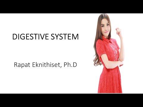 ระบบการย่อยอาหาร DIGESTIVE SYSTEM