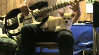 Sublime - I Love My Dog Dub (Bass Solo Cover)