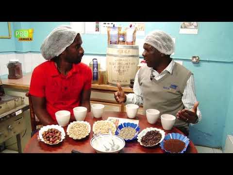 A Unique Coffee Experience   Mavis Bank Coffee Factory