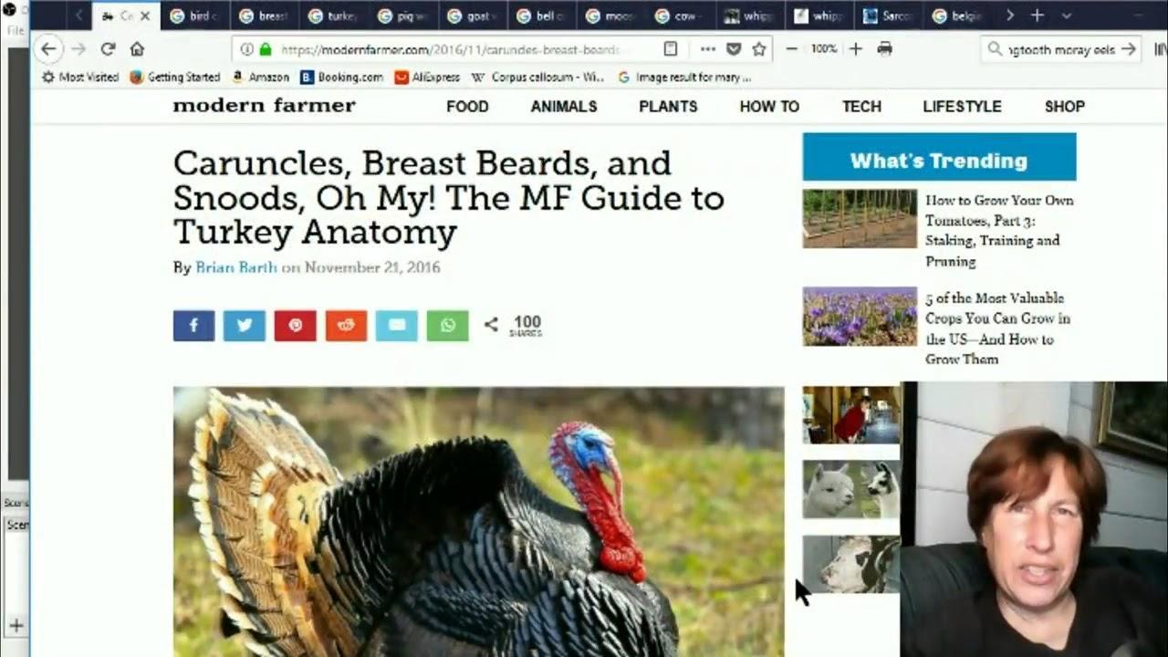 Mirror Glass Teeth Pig Wattles Breast Beards Turkey Snoods
