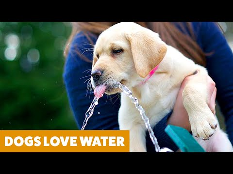 Funny Dogs Videos! Dogs vs Water  | Funny Pet Videos