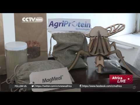World's first commercial fly farm opens in South Africa