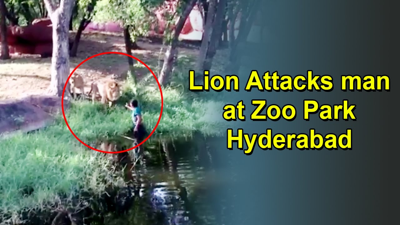 Lion Attacks On Man Hyderabad Zoo Park Youtube