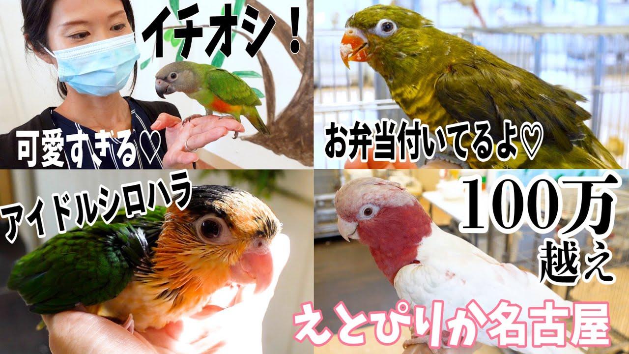 ムラクモインコをお迎えに、えとぴりか名古屋本店まで!