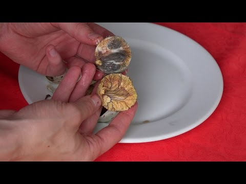 What's inside Balut?