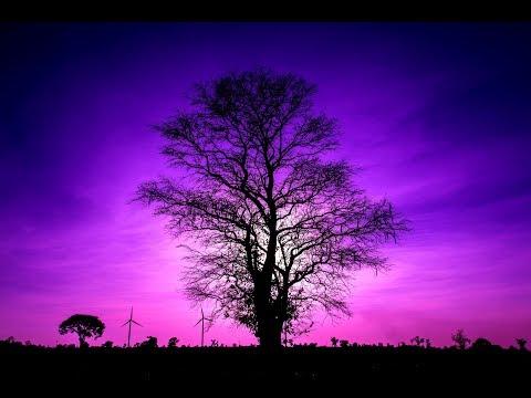 Miracle Sleep Music 432Hz  Healing Sleep Patterns | Calming Music Dee…