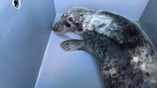 Vissers redden doodvermoeide zeehond