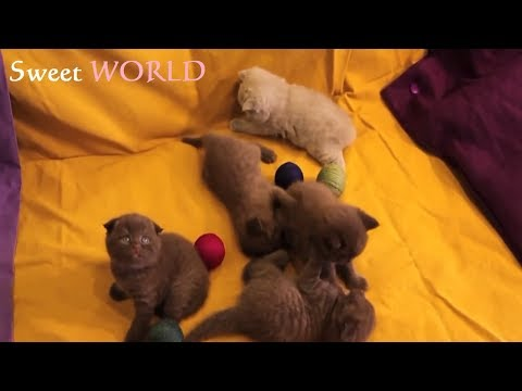 Baby Kittens Playing - Very Cute