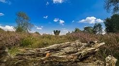 Fototipps für die Landschaftsfotografie am Beispiel Lüneburger Heide