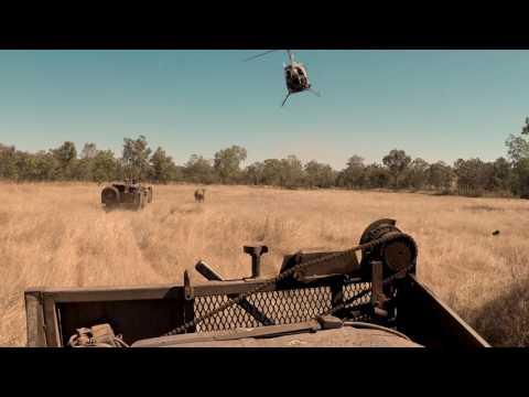 Buffalo Catching   Northern Territory, Australia