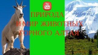 Природа  и мир животных в горном Алтае