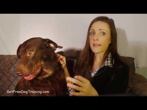 doggy-dans-the-online-dog-trainer-reviews-&-testimonials
