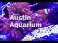 Things to Do in Austin with Kids: Austin Aquarium