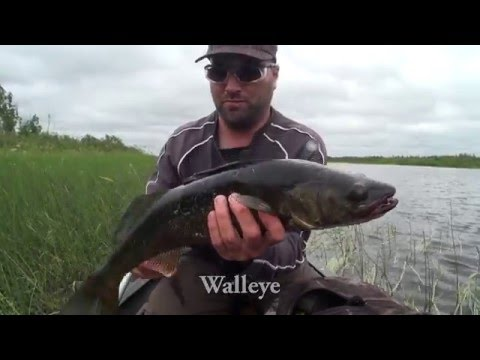 Northern Ontario River Canoe Trip- Missinaibi  River (Peterbell to Mattice) Part 1