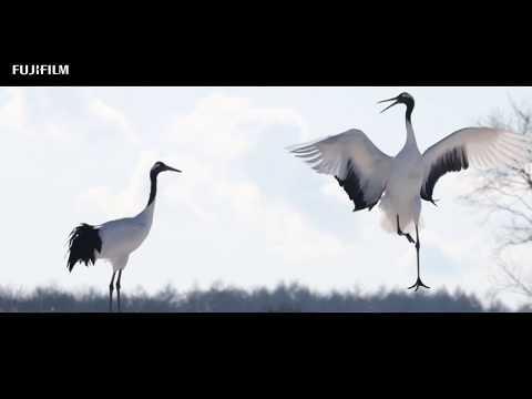 Fujifilm X-T4: Wildlife in Hokkaido by William Chua