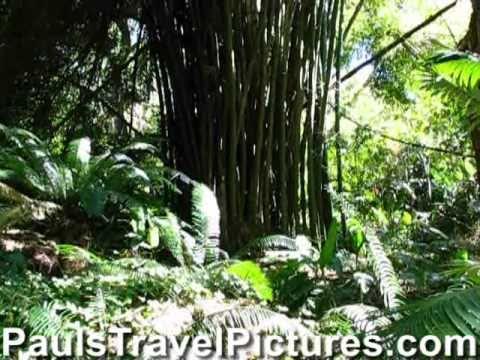 Garden of the Sleeping Giant Video Nadi - Viti Levu - Fiji Islands - Canon S5 IS
