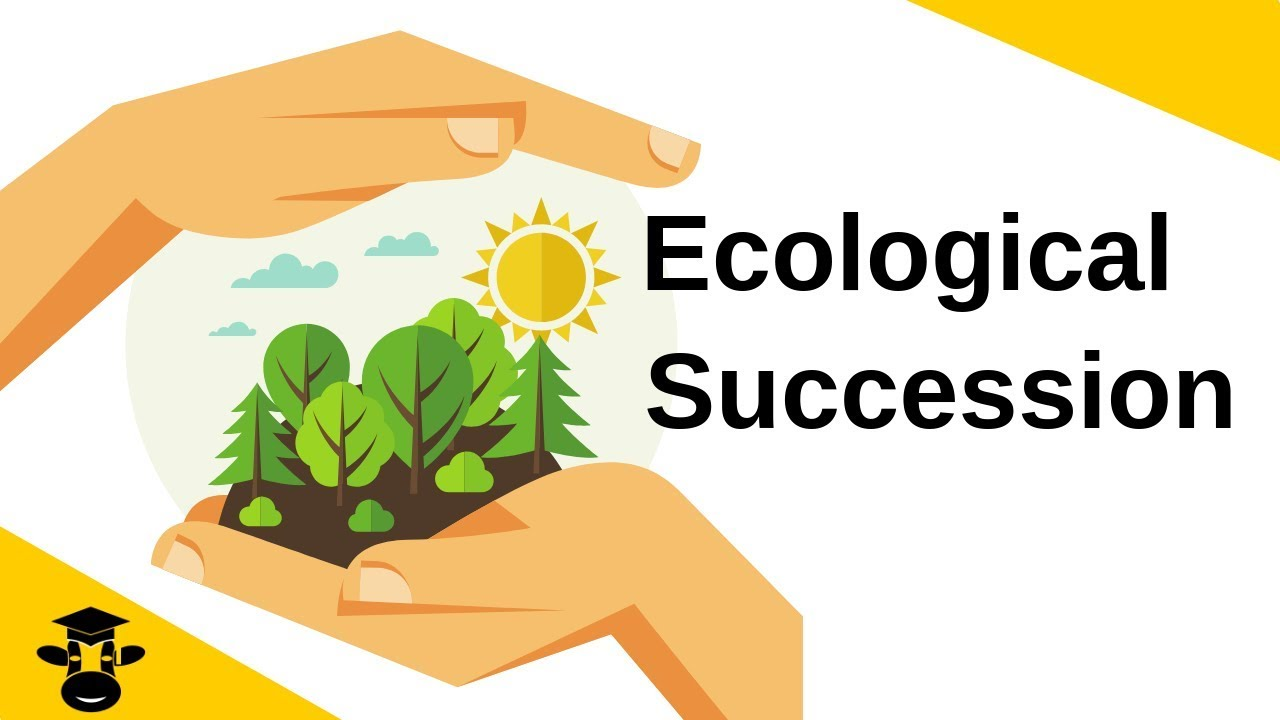 Download Ecological Succession-Primary and Secondary