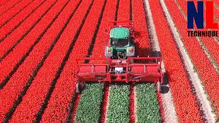 The Story of The Tulips - From Planting to Harvest Process With Modern Machines