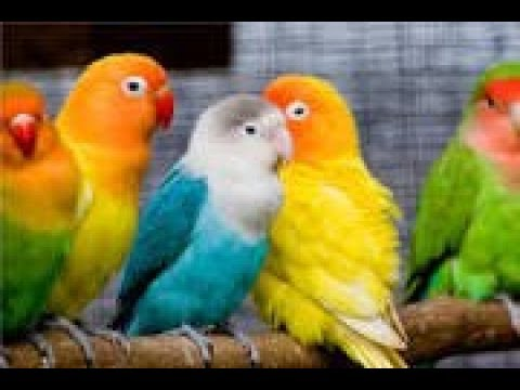 Different Types Of Parrots Youtube