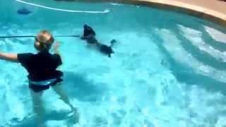 "Glendale Dog Training ""k9katelynn"" Teaches Dizzy (pug/labrador Mix) And His Owner How To Swim !"