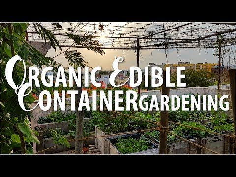 Organic Rooftop Garden (Hyderabad) - 1 (2017)