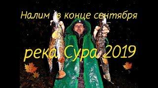 Рыбалка на налима в конце сентября Ловля налима на ерша Налим ночью на реке