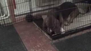 Puppy Homeschool: Crate Training Fun