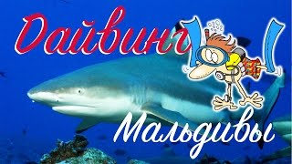 ДАЙВИНГ С АКУЛАМИ И МУРЕНАМИ МАЛЬДИВЫ | DIVING WITH SHARKS MALDIVES