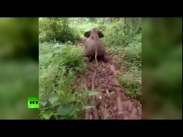 Ele-fun: Baby elephant sliding down hill in China