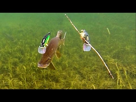 Thumbnail: Pike attack Mike & Ricky fishing lures. Hechtangeln. Gäddfiske. Pesca del lucio Рыбалка щука атакует