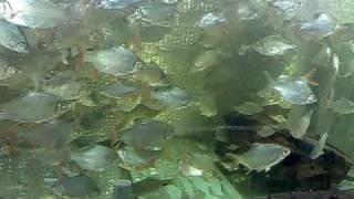 Tin Foil In An Aquarium