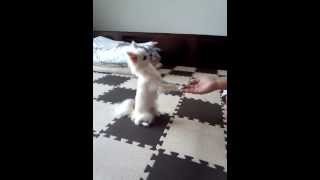 尻尾ふりふりを練習中のアリス(*^o^*)