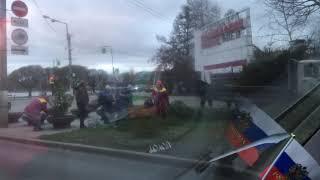 Смотреть видео Убийство хвойных деревьев в Санкт-Петербурге онлайн