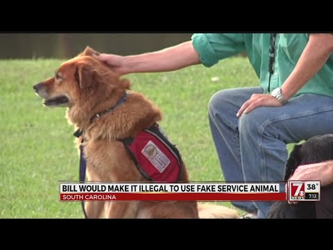 Bill would make it illegal to use fake service animal