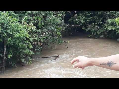 Yara do sítio do pica pal amarelo  mora aqui em sinop Mato Grosso