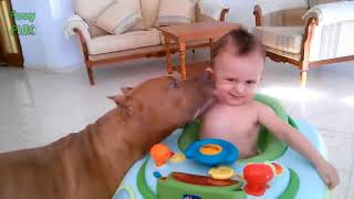 Funny Dogs Kissing Babies Compilation! (2018)