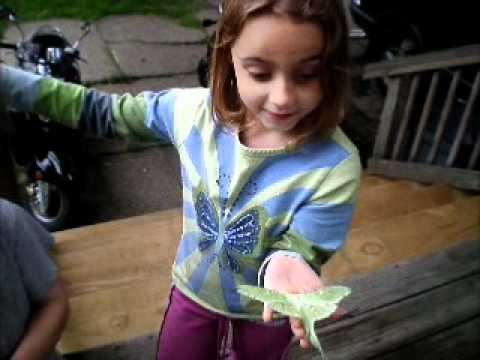 Luna Moth (Actias luna)          Chloe finds a rare Luna Moth!!!