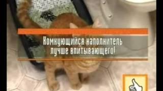 kontrolnaya_zakupka_prettycat.mp4