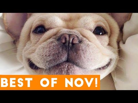 Funniest Pet Reactions & Bloopers of November 2017 | Funny Pet Videos