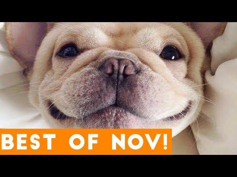 Funniest Pet Reactions & Bloopers of November 2017 Funny Pet Videos