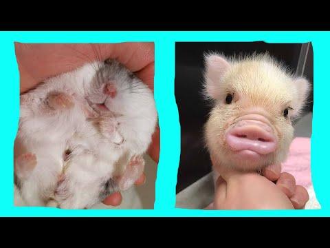 Cute Baby Animals Dogs And Cats | СМЕШНЫЕ ЖИВОТНЫЕ 2020 | Baby Animals | Веселые котята #64
