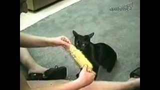 Faze comice cu animale